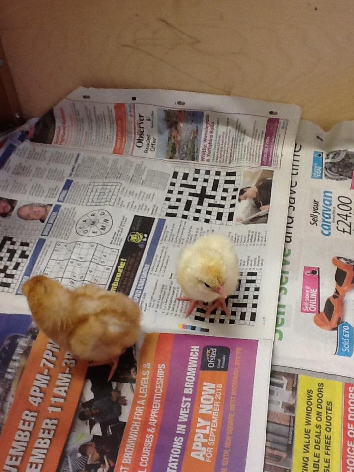 Living Eggs7